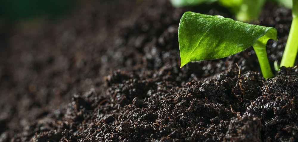Trwa Międzynarodowy Rok Gleb