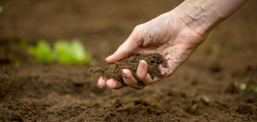 Struktura gleby – jak ją poprawić?