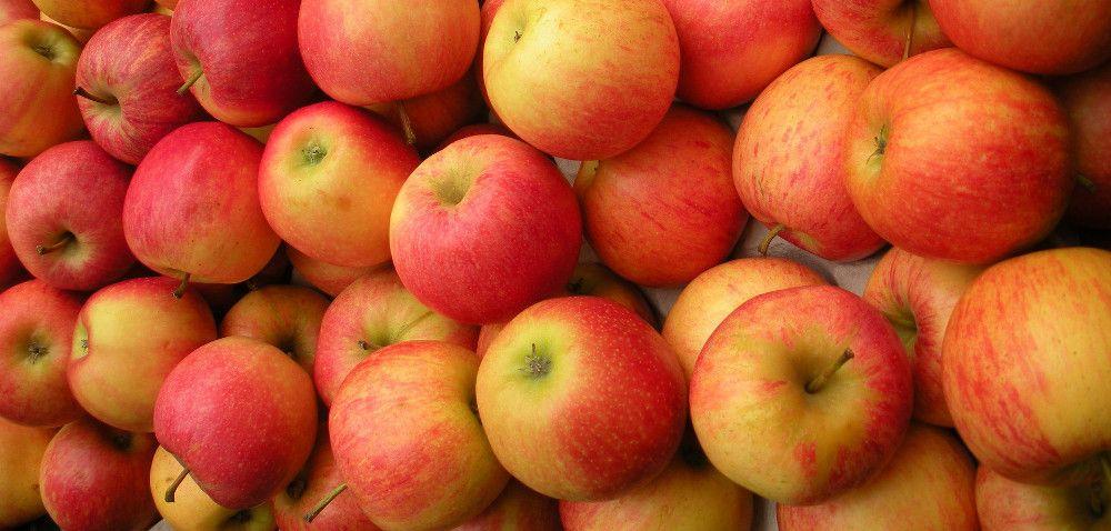 Eksport owoców zPolski – najnowsze dane