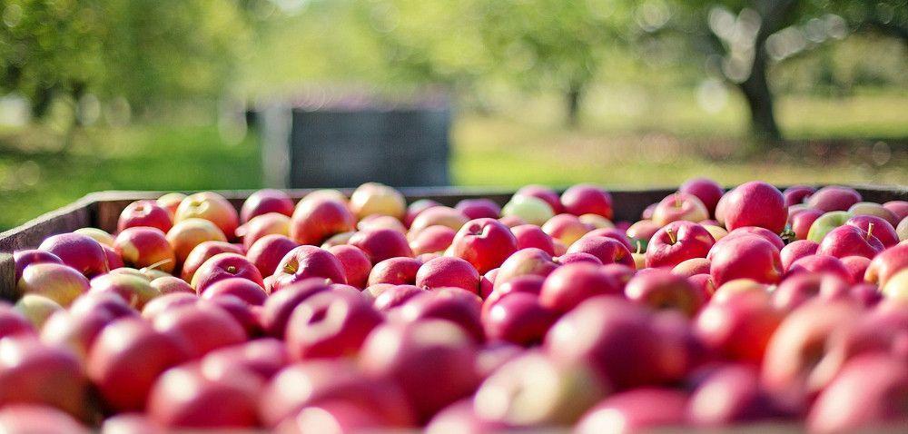 Coraz mniejsza sprzedaż jabłek iziemniaków