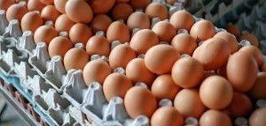ceny jaj