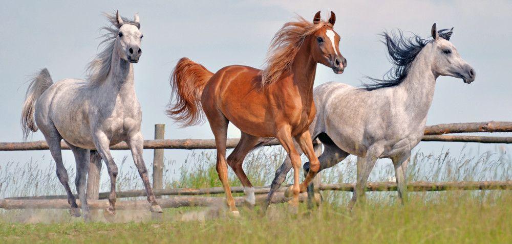 Wyjątkowe pokazy koni wParyżu