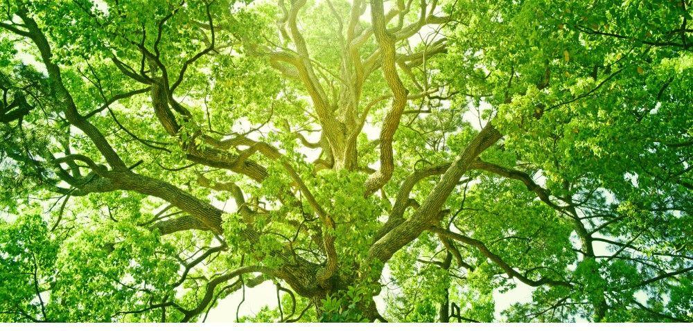 Ustawa oochronie środowiska zatwierdzona