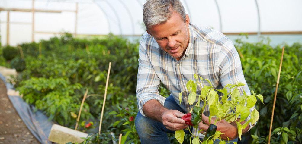Uprawa warzyw ekologicznych: jak sobie radzić zochroną?