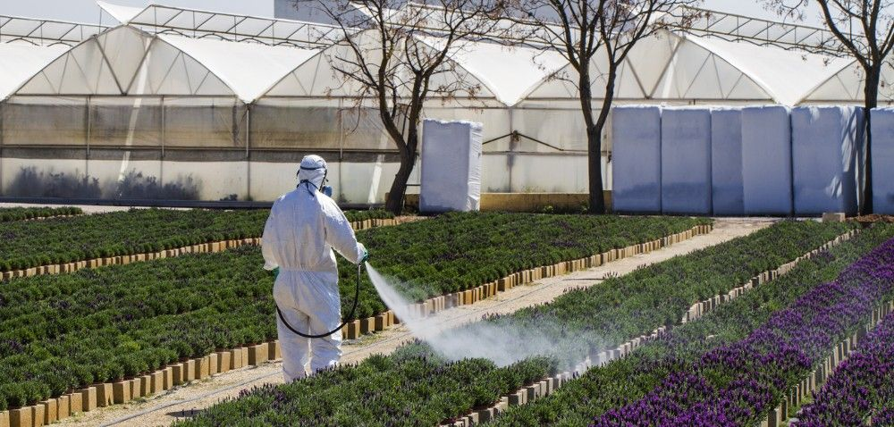 Środki ochrony roślin wykorzystywane wszkółkarstwie