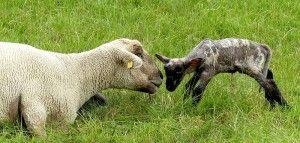 dobrostan zwierząt