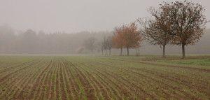 ustawa oustroju rolnym