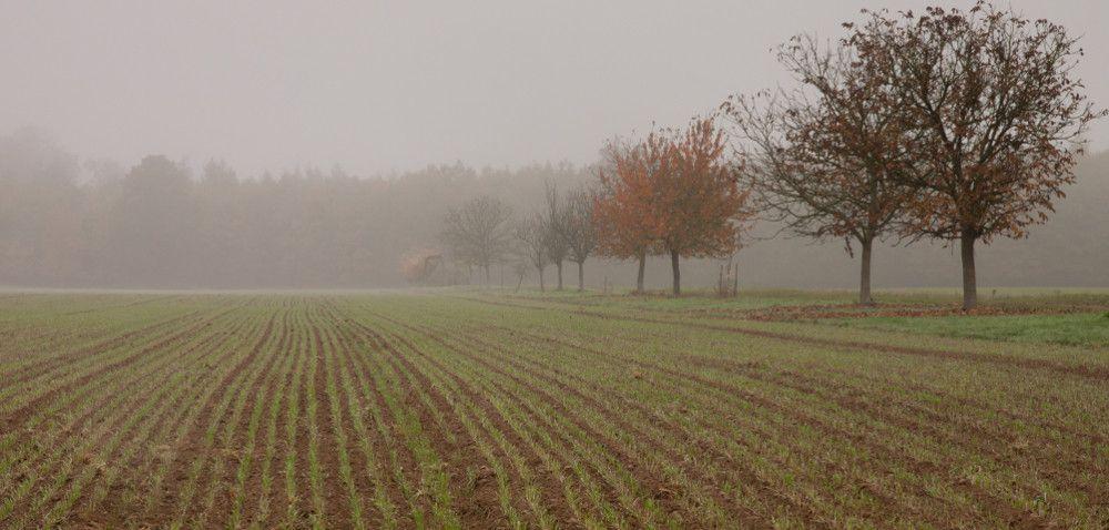 Wegetacja roślin: czy czeka nas ciepła zima?