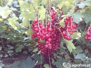 środki ochrony roślin sady amatorskie