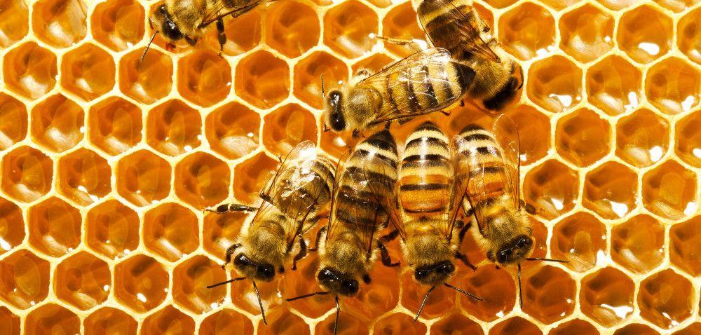 Pszczoły ifarmy wiatrowe mogą żyć wzgodzie [AKTUALNOŚCI]