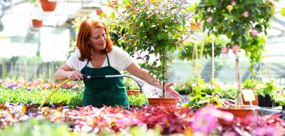 Naturalne środki ochrony roślin dla ekologicznych plantacji