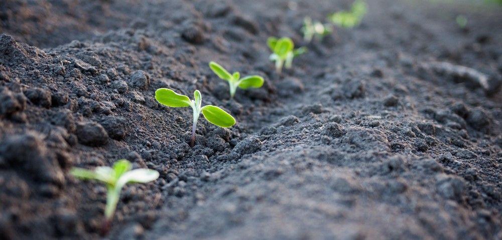 Szkolenia zzakresu środków ochrony roślin