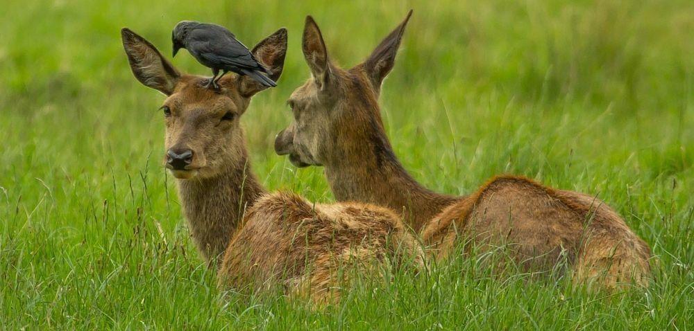 Zwierzęta łowne nadal niszczą pola