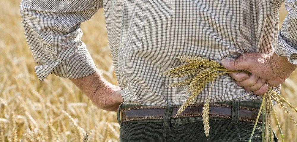 Rolnictwo ekologiczne pełne pułapek