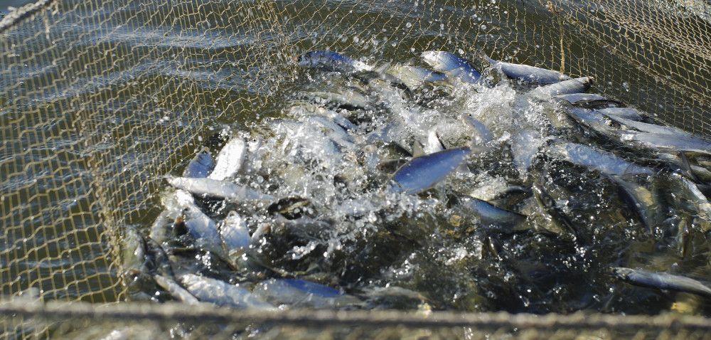 Rybołówstwo: szkolenia dla hodowców