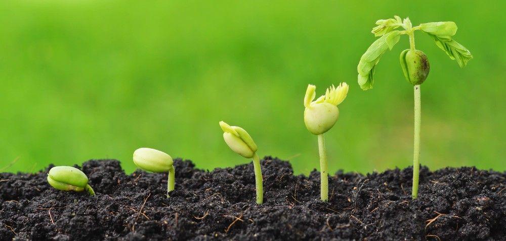 Przygotowanie gleby do siewu: jakie są koszty?