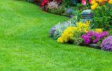 ochrona trawników