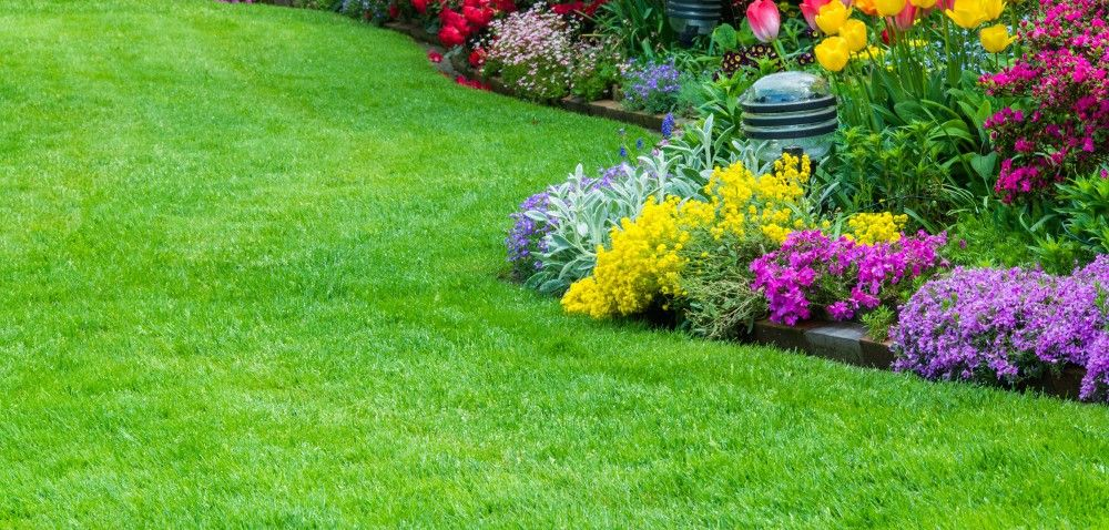 Herbicydy do odchwaszczania trawników dla amatorów