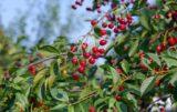 środki ochrony roślin do amatorskich sadów