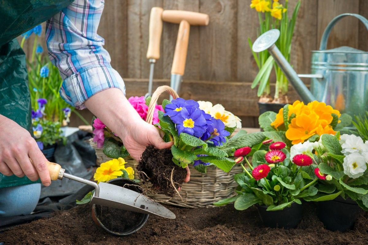 ochrona ro lin ozdobnych ogrodnictwo amatorskie. Black Bedroom Furniture Sets. Home Design Ideas