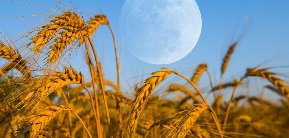 Czym jest rolnictwo biodynamiczne?