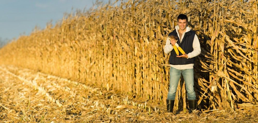 Prawo: Premie dla młodych rolników wramach PROW