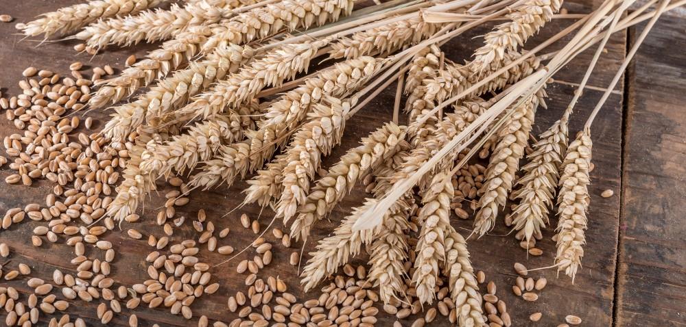 Zbiory zbóż wUE – prognozy