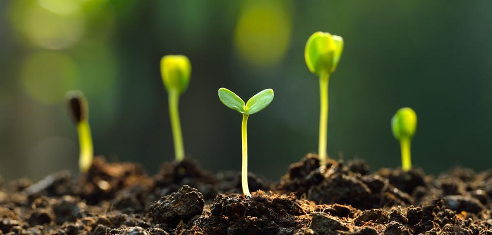 Skutki wycofania niektórych środków ochrony roślin