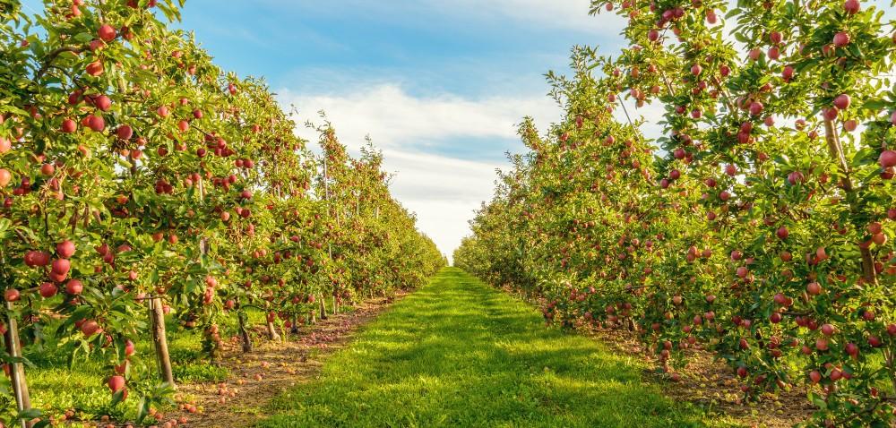 Stan środków przeznaczonych do ochrony jabłoni. Cz. I