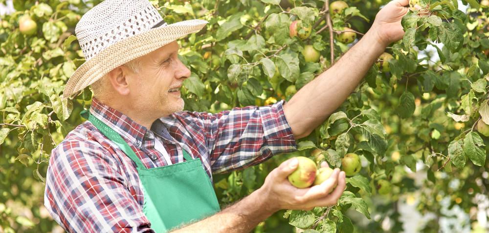 KRIR: Walka zpodatkiem VAT od owoców wycofanych zrynku