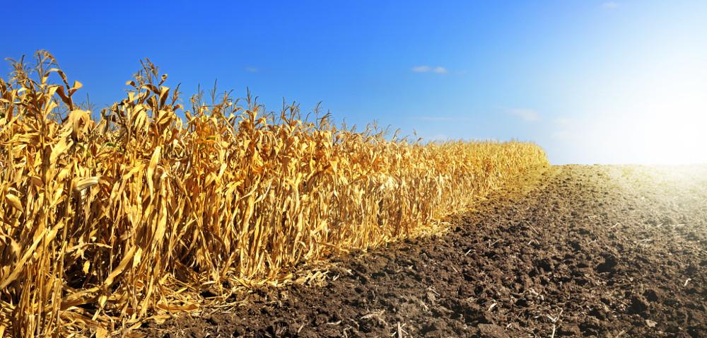 Straty wrolnictwie spowodowane suszą [AKTUALNOŚCI]