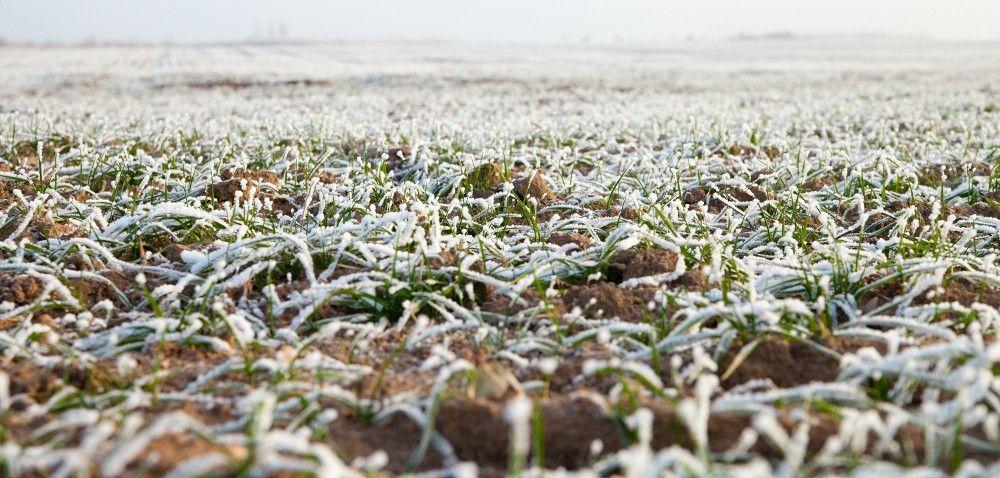Zima: zmiany temperatury mogą nas słono kosztować!