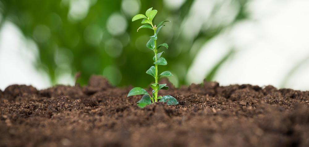 Integrowana ochrona aIntegrowana produkcja roślin