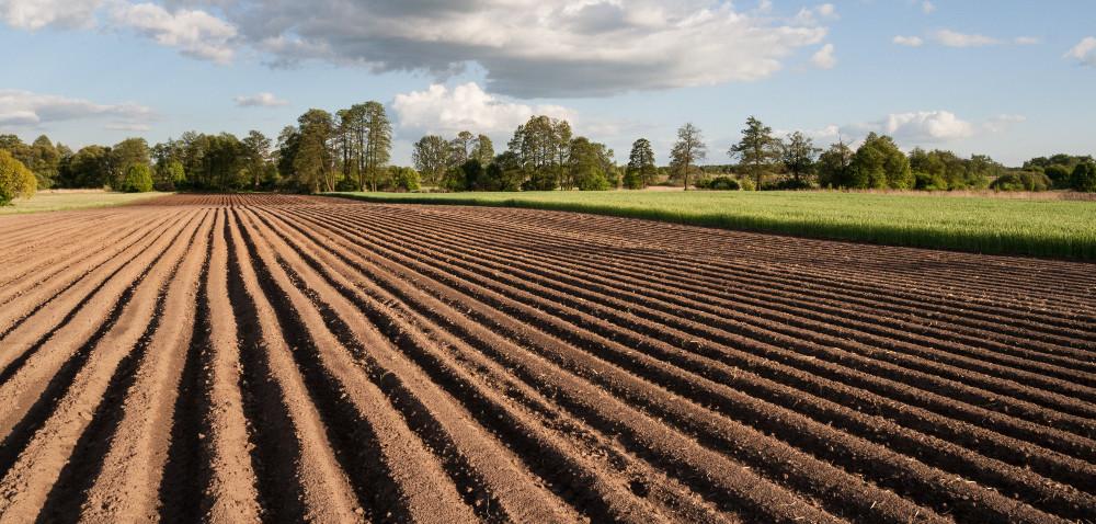 LIR: lepsza ziemia wdzierżawę niż na sprzedaż!