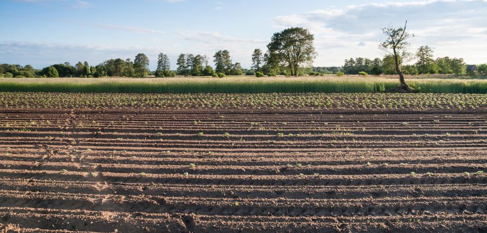 ANR stawia na dzierżawy, anie sprzedaż ziemi