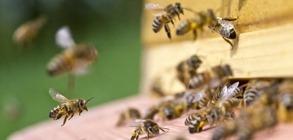 Pszczoły wykonały już pierwsze obloty