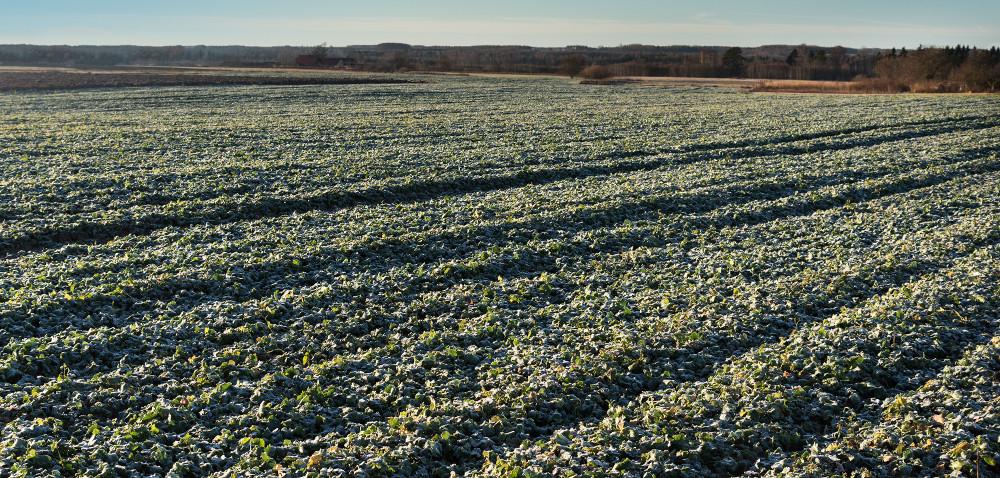 Rolnicy zkujawsko-pomorskiego chcą odszkodowań
