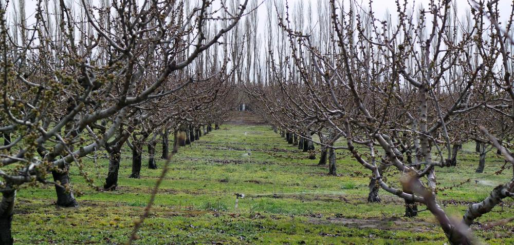 Pozimowy przegląd drzew wsadach
