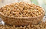 białko sojowe