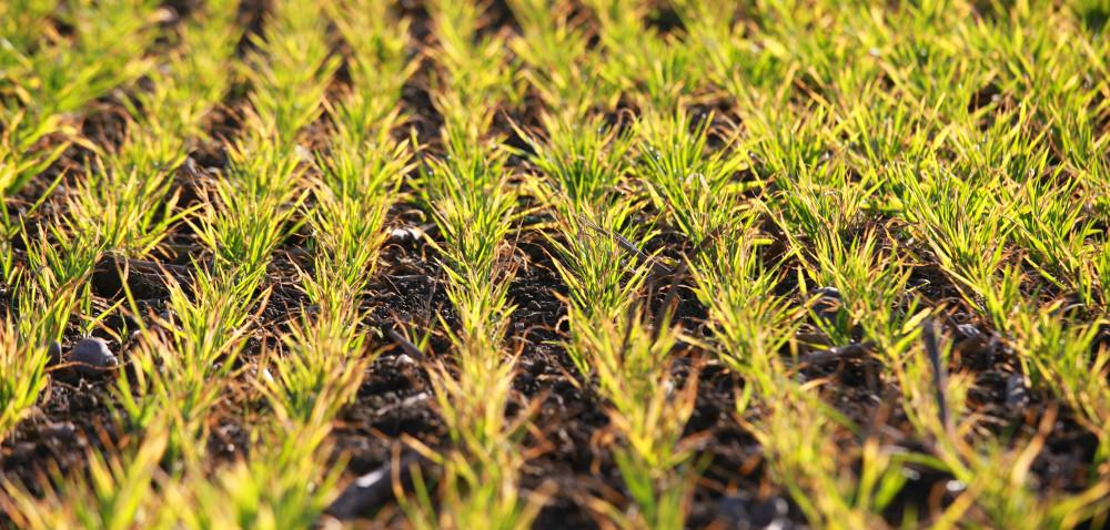 Wiosenne budzenie rolników