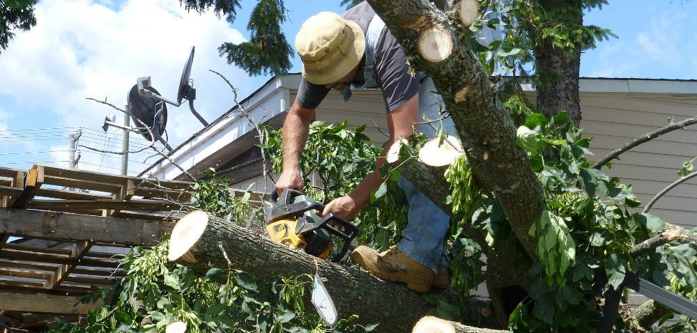 Łatwiej wyciąć niechciane drzewa
