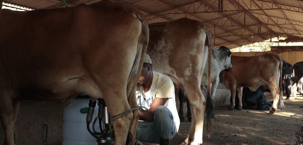 Czy wdobie kryzysu można zarobić na produkcji mleka?