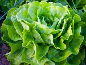 Zwiększ ilość warzyw iowoców wdiecie!