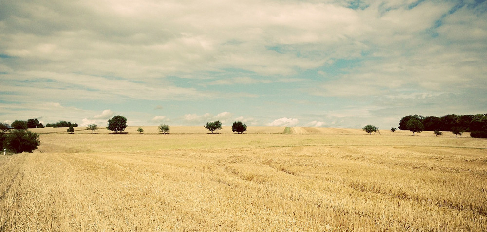 Dolny Śląsk: chcą odroczenia czynszu dzierżawnego
