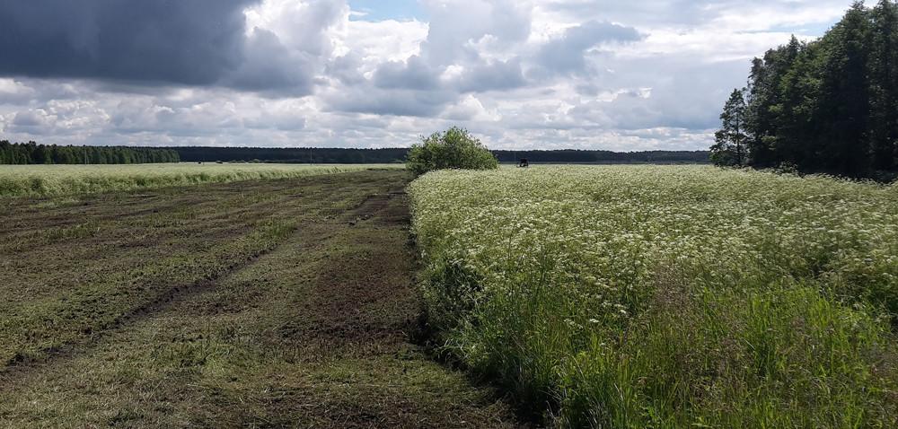 Jak chronić polską ziemię? Czy ustawa pomoże?