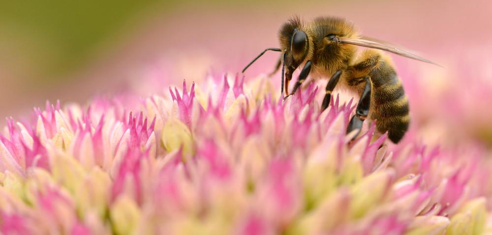 Program Wsparcia Pszczelarstwa
