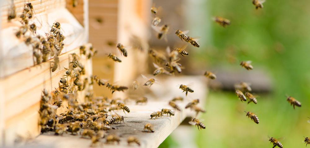 Kobiety lubią… pszczoły. Dlaczego?