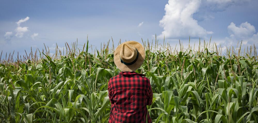 Unijni rolnicy protestują