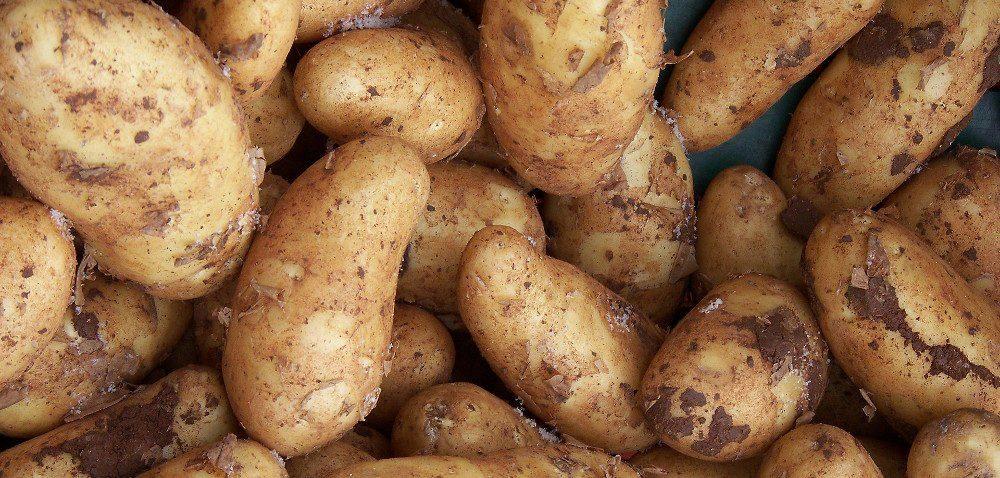 Dużo ziemniaków wczesnych. Ale czy młodych?