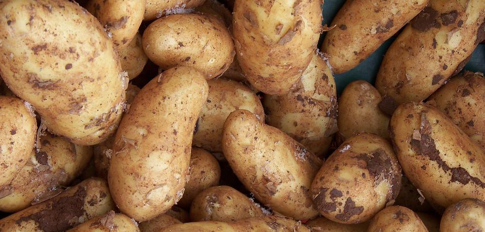 Prąd zziemniaków: gotowane są lepsze!